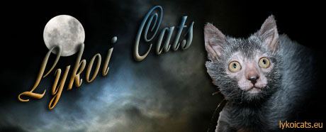 Race Chat Loup Garou ou Encore Chats Loup-garou